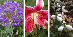 The right time to plant bulbs